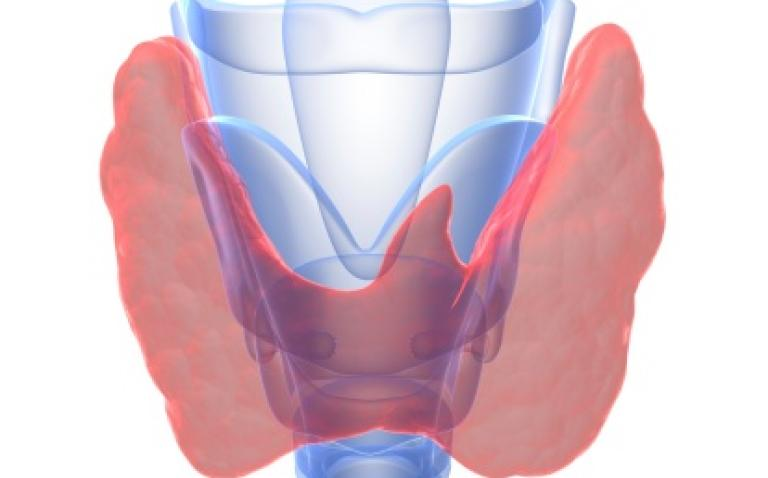 Nexavar meets primary endpoint in thyroid cancer