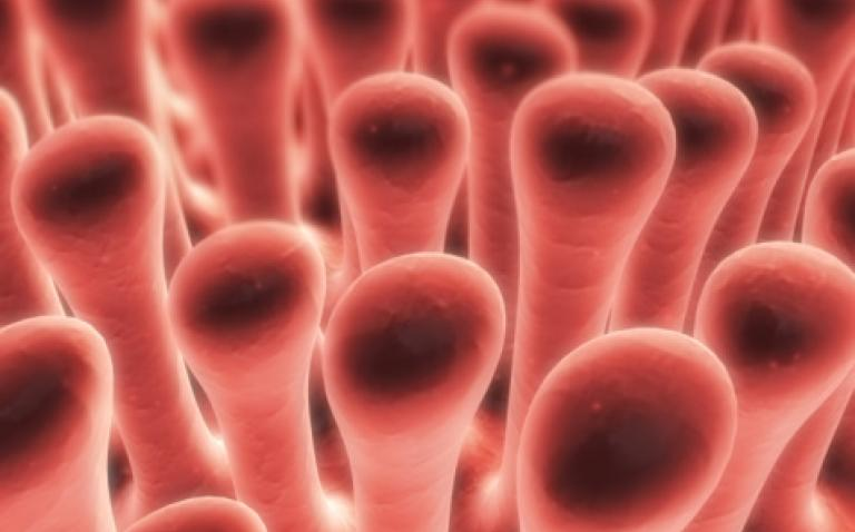 Data shows effectiveness of biosimilar infliximab in patients with inflammatory bowel diseases