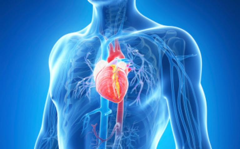 Real world study shows ivabradine significantly improved quality of life in elderly patients with heart failure