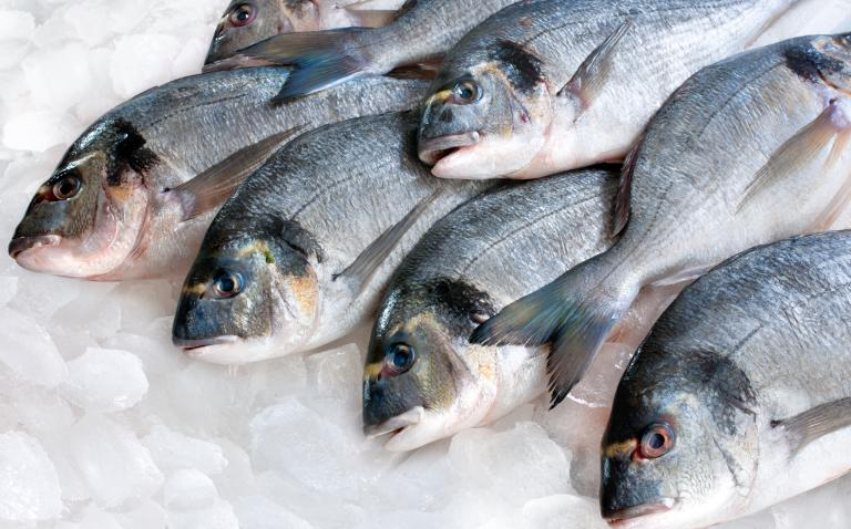 A hope for fish allergy sufferers?
