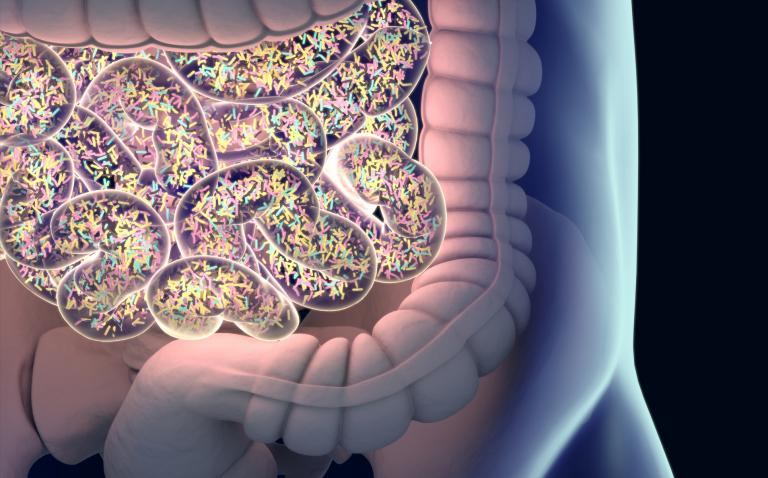 Study shows that lupus is strongly linked to imbalances in gut microbiome