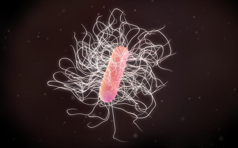 C. diff adapting to spread in hospitals