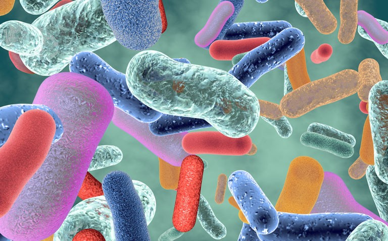 gut microbiome and intestinal inflammation
