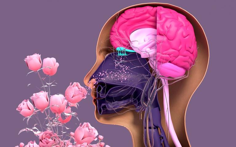 olfactory test covid